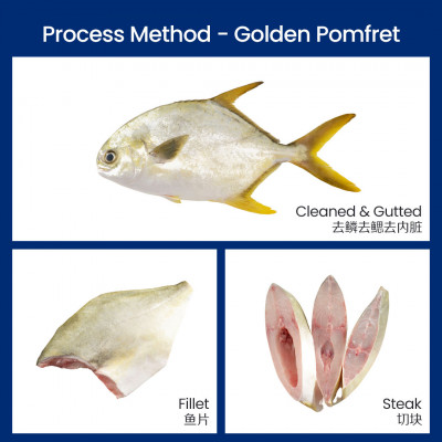 FRESH FISH GOLDEN POMFRET WHOLE 400/600GM ( BY NOS)
